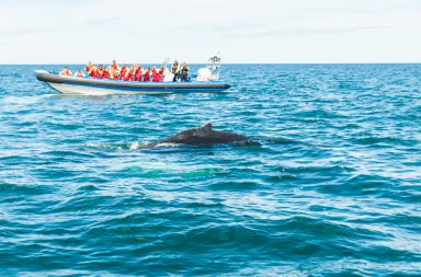 ballenas husavik islandia
