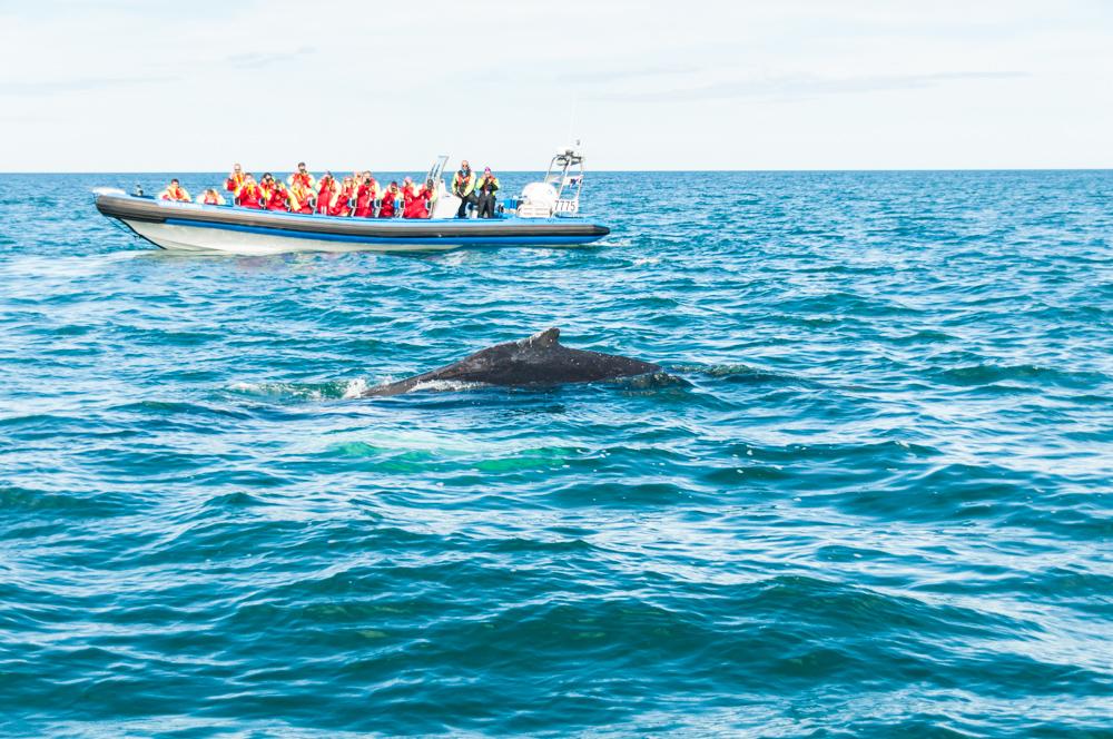 Ruta por Islandia (II): Avistamiento de ballenas en Húsavík, Dettifoss y relax en el lago Myvatn