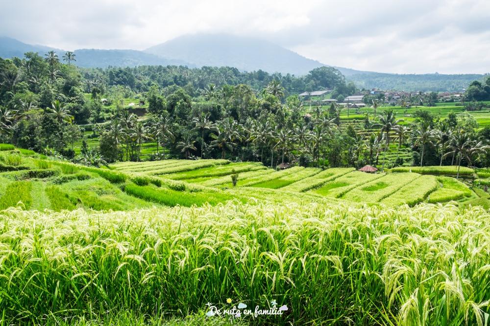 excursiones privadas en español en Bali