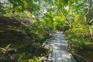visitar Kyoto bosque de bambú Arashiyama