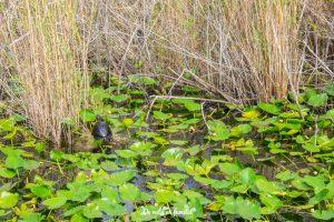 visitar los everglades desde miami