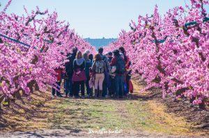 ruta de la flor del melocotonero en Aitona con Fruiturisme