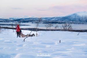 trineo de perros en Tromso