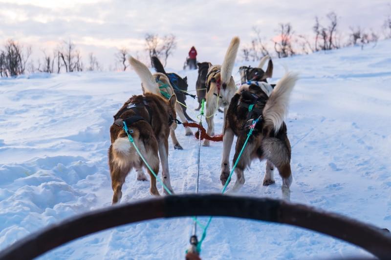Excursión en trineo de perros en Tromso con niños