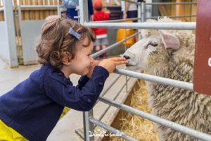 visitar la Cotswolds Farm Park con niños