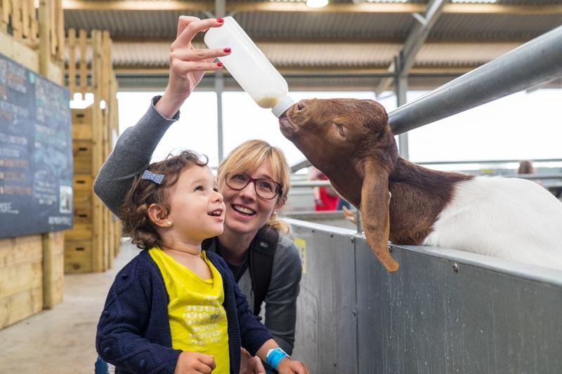 Nuestra experiencia visitando la Cotswolds Farm Park con niños