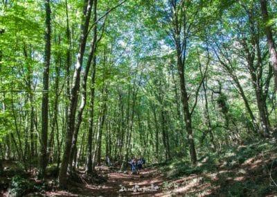 ruta por cataluña garrotxa fageda d'en jordà