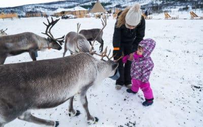 Visitar una granja de renos en Tromsø