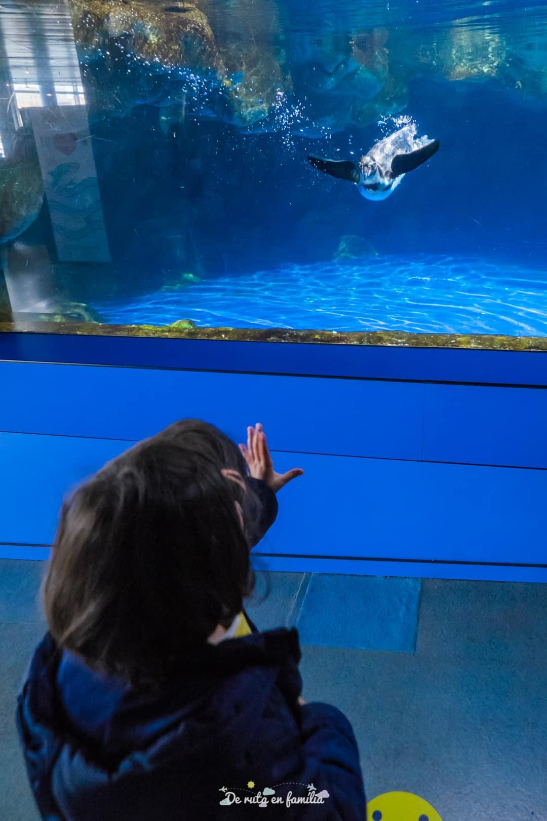 Barcelona con niños. Aquarium