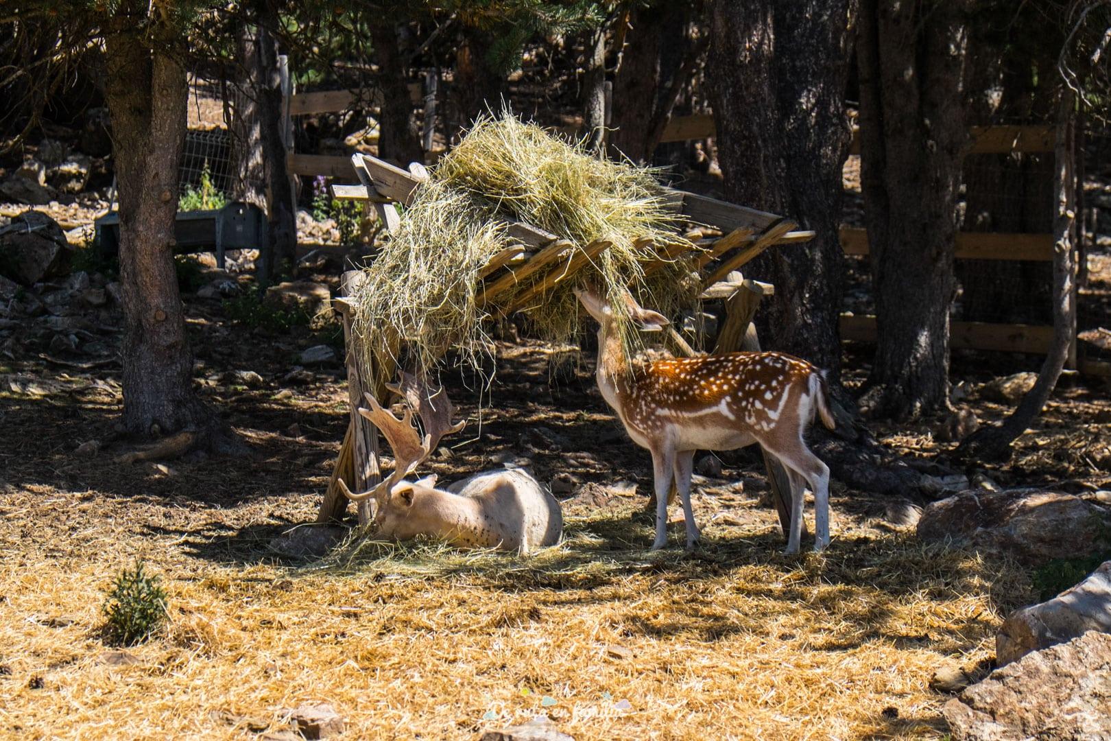 parque de los animales naturlandia