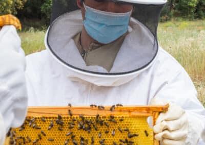 Actividad El mundo de las abejas de Drac Actiu